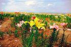 Blumen zum Selbstpflücken