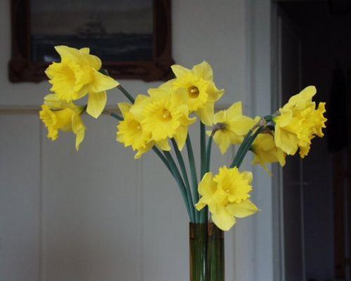 Blumen001