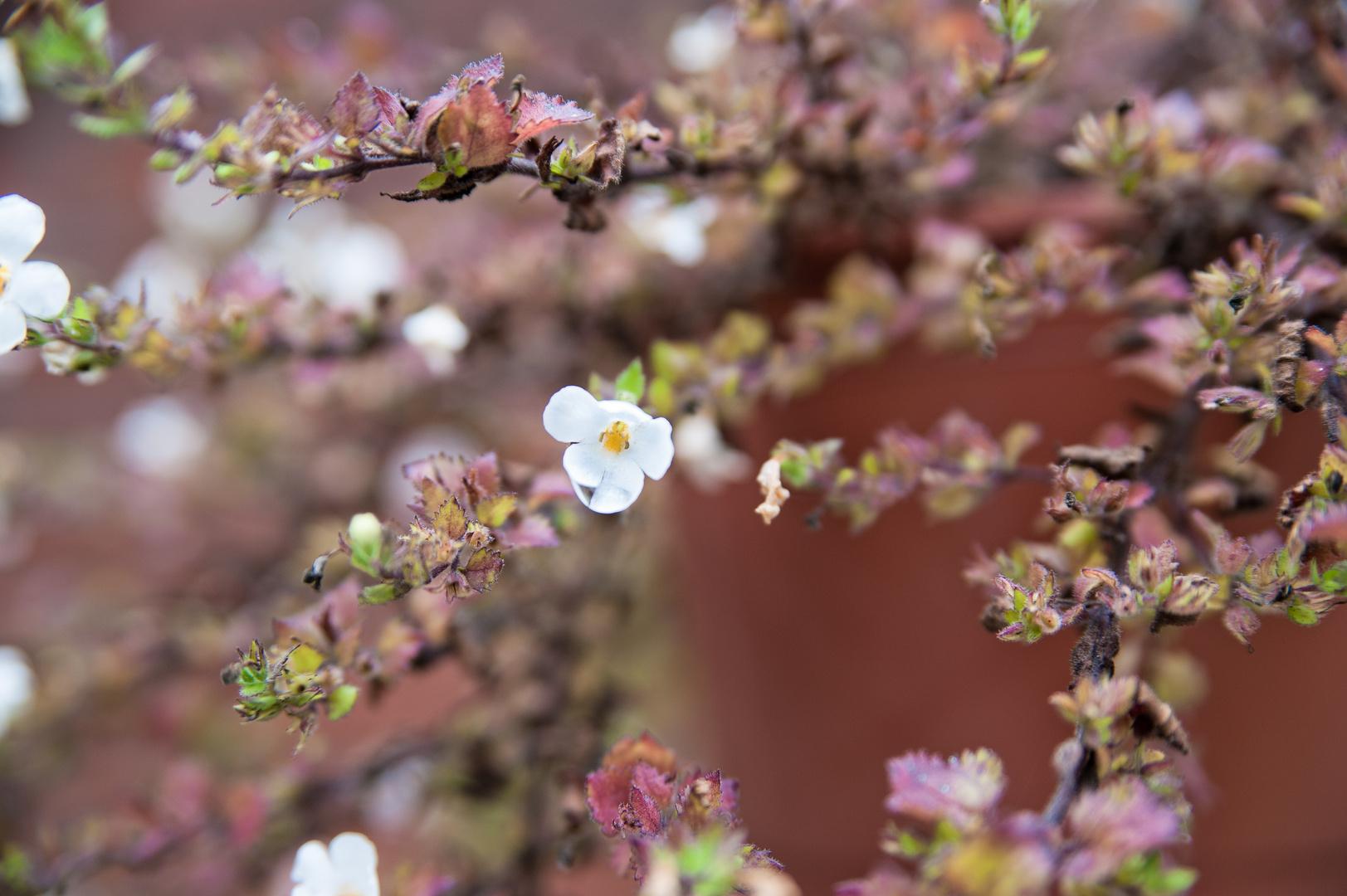 Blumenampel in Pastel