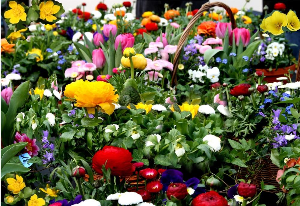 Blumenarrangement Foto & Bild | Natur, Jahreszeiten, Frühling ...