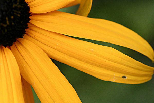 Blumenausschnitt