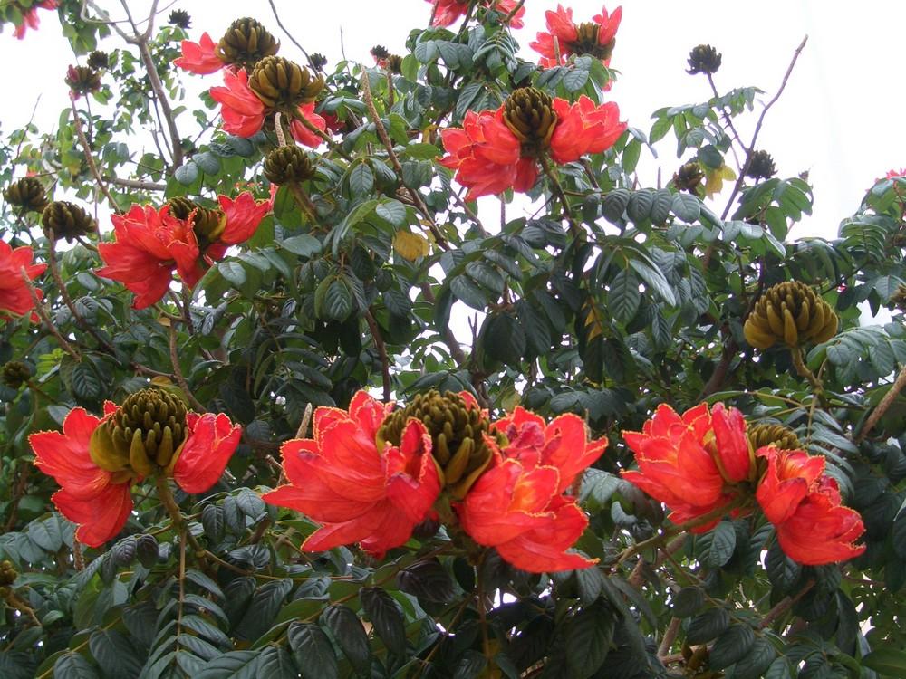 Blumenbaum