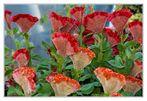 Blumenbeet auf der Bundesgartenschau