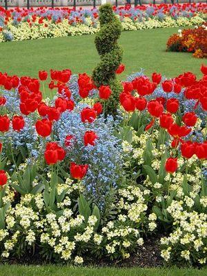 Blumenbeet vor Buckingham Palace in London