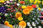 Blumenbet