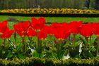 Blumenbett des Schloss Schönbrunn