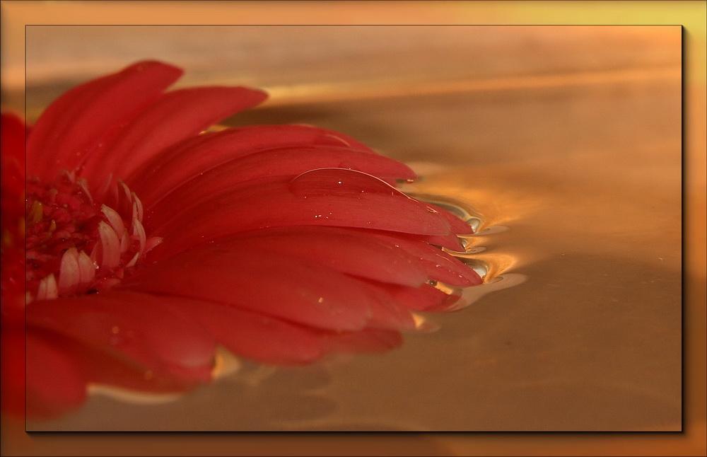 Blumenbild...