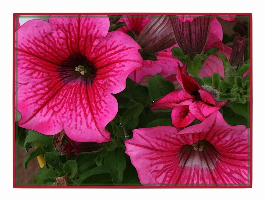 "Blumenbild in Aquarellfarbe ""getaucht"""