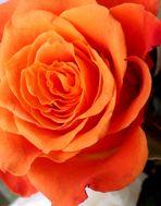 Blumenbilder 53