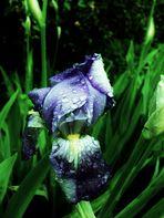 Blumenbilder 57