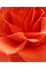 Blumenbilder 60