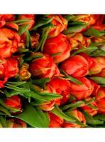 Blumenbilder 7