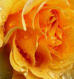 Blumenbilder 79