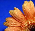 Blumendetail 1