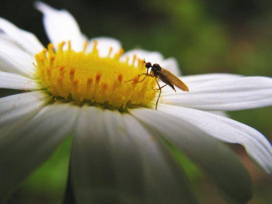 Blumendetail 2