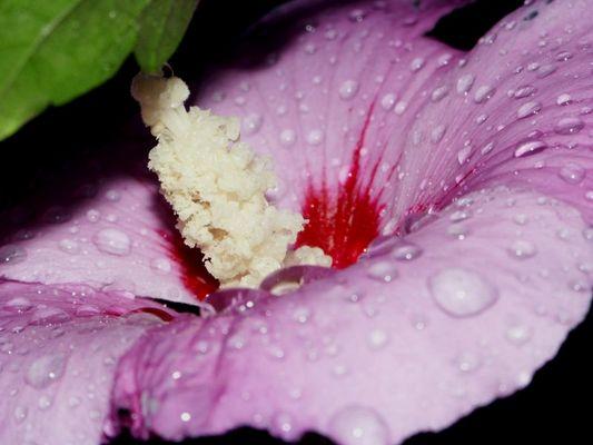 Blumendetail 3