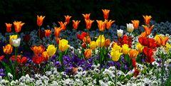 Blumenfeld im Mai