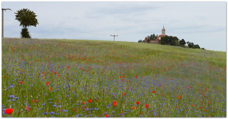 Blumenfeld unter der Leuchtenburg