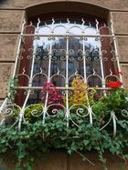 Blumenfenster