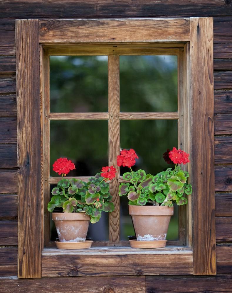 blumenfenster foto bild pflanzen pilze flechten bl ten kleinpflanzen gartenpflanzen. Black Bedroom Furniture Sets. Home Design Ideas