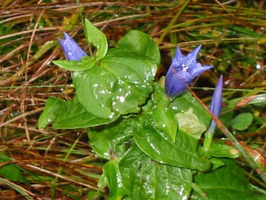 Blumenfotogrfie mit  Digitalzoom
