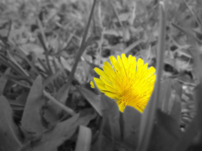 Blumenfotos von Anfänger