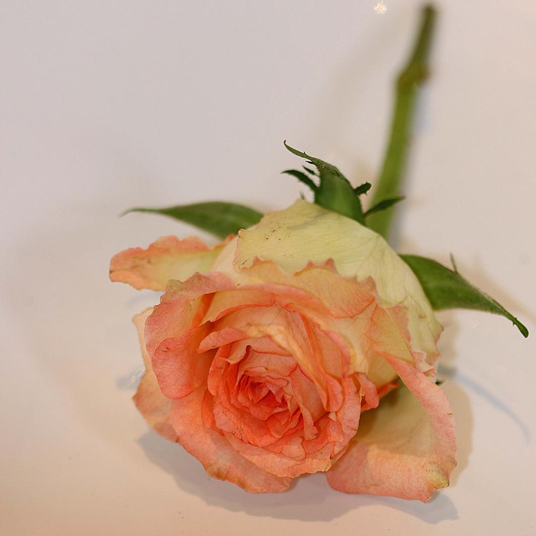 Blumenfreude 3