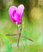 Blumenfreund