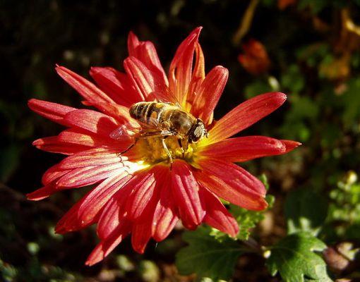 Blumengast