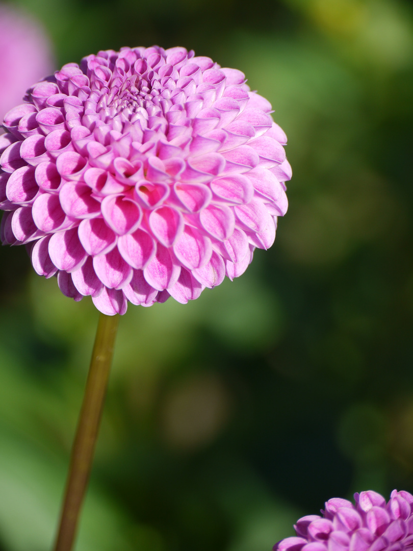 Blumenglück