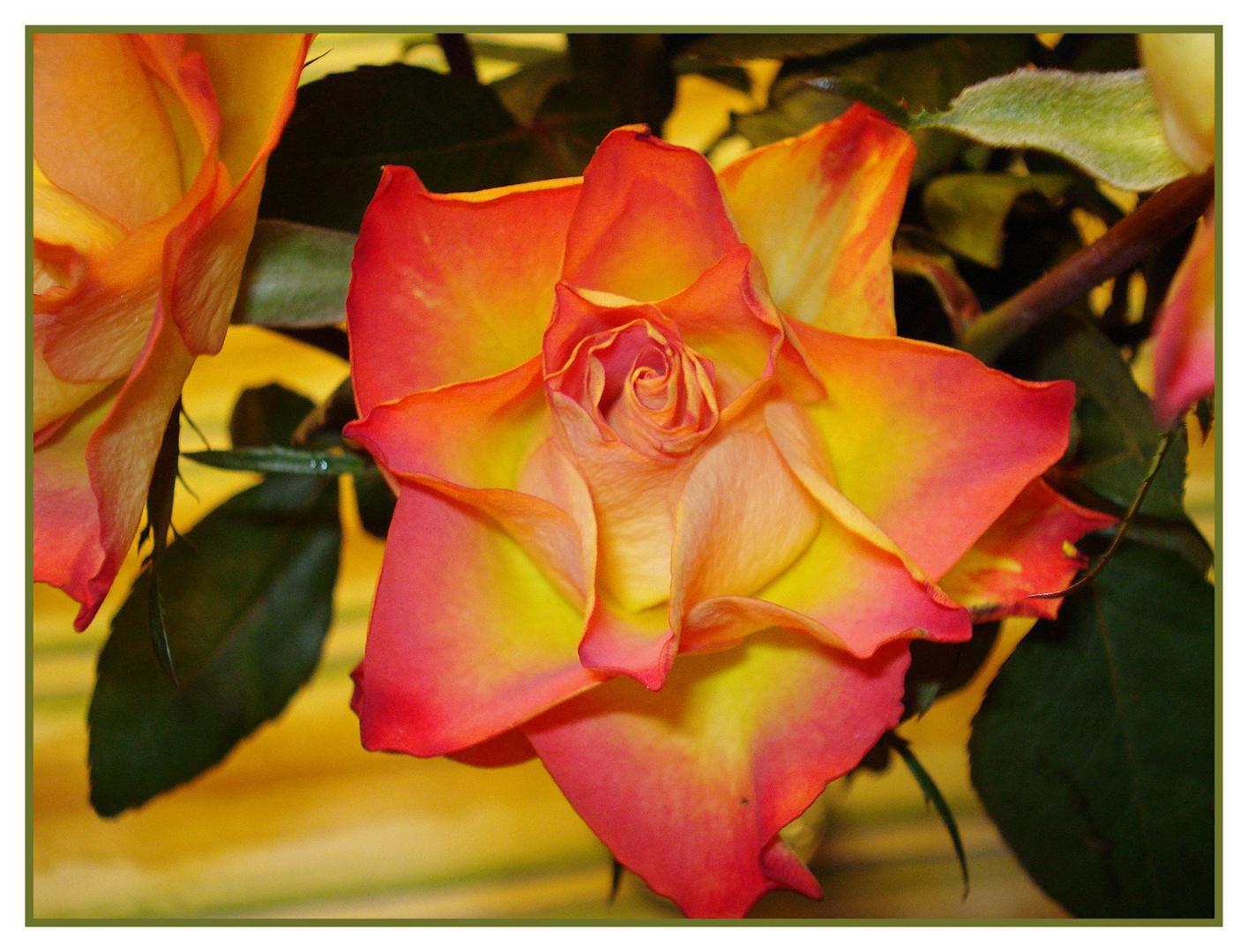 Blumengrüsse für euch und ein schönes wochenende bei vielleicht