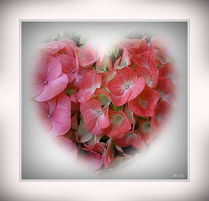 Blumengrüsse zum Muttertag . . . . . Pour la Fête des Mamans