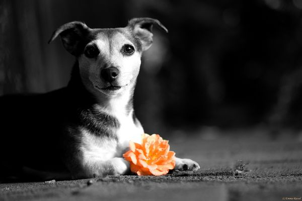 *Blumengruß...*