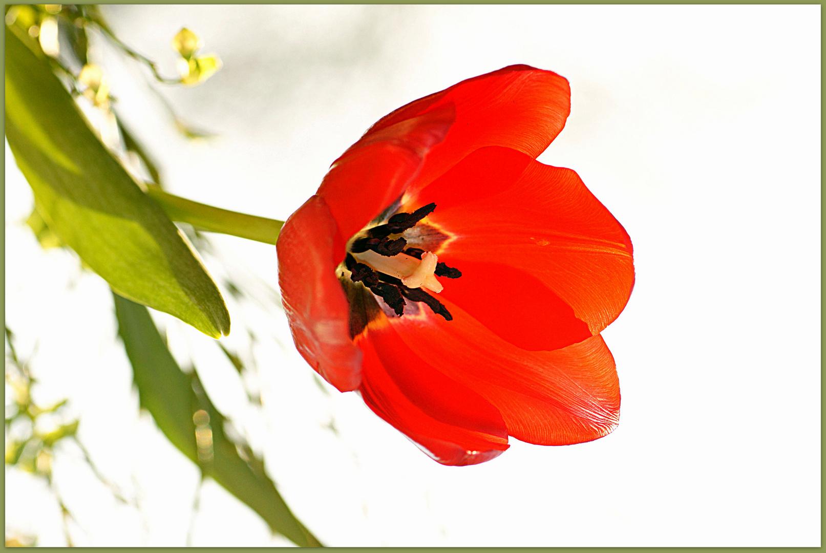 Blumengruß......
