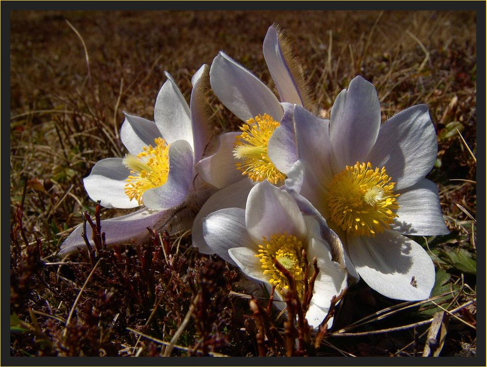 Blumengruß aus meinem Archiv...