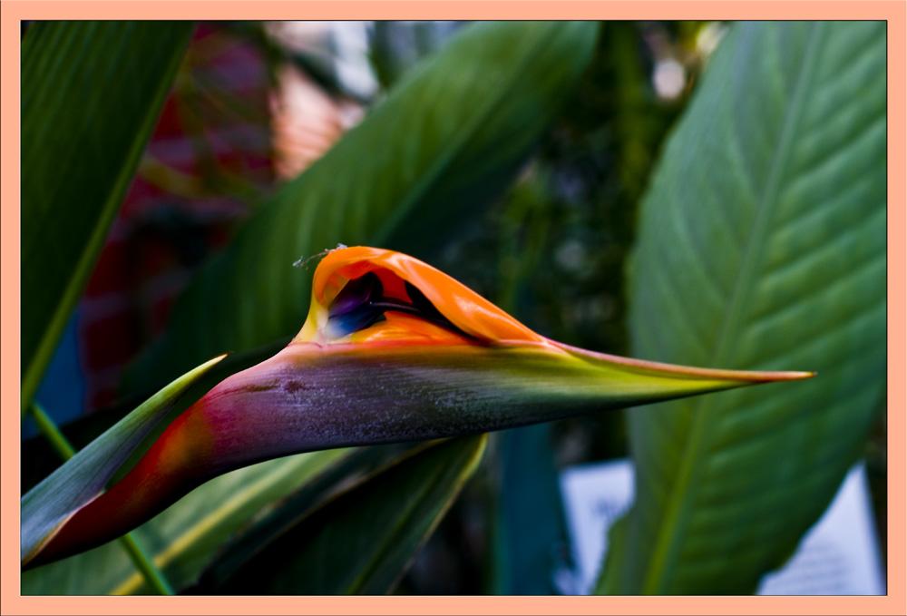 Blumengruß aus Südafrika
