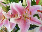 Blumengruß aus Vietnam
