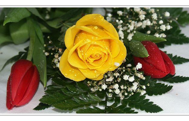 Blumengruß zum Valentinstag (1)