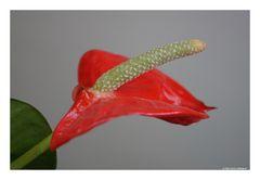 Blumengruß zum Wochenende :-)