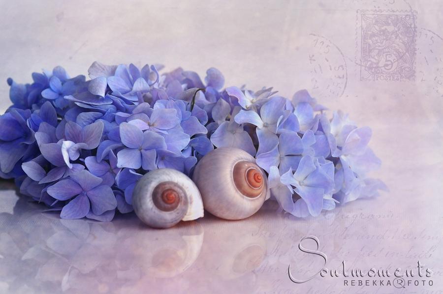 Blumenhäuschen ...