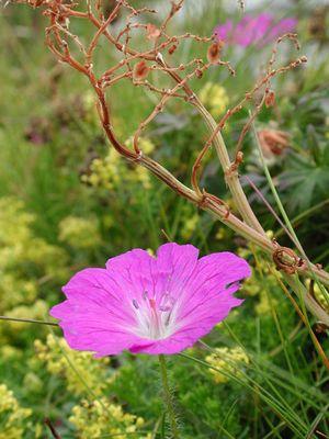 Blumenidylle auf den Aron Inseln