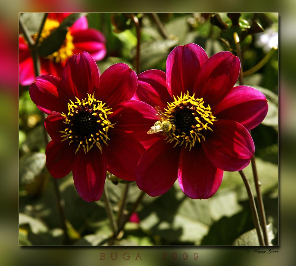 Blumenimpressionen von der BUGA 2009_2