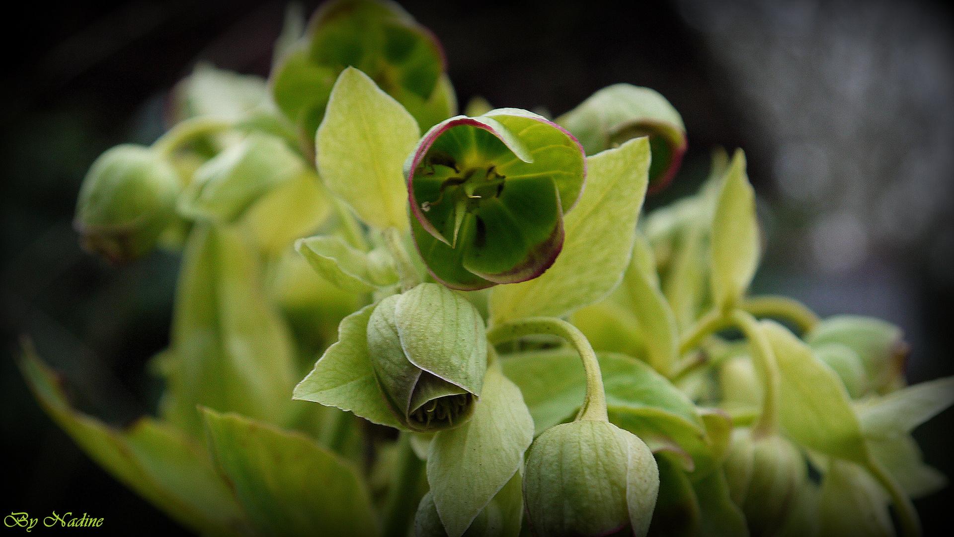 Blumeninnere