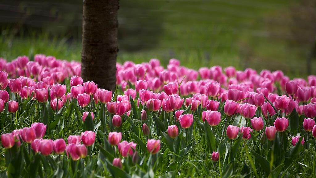Blumeninsel im Frühling