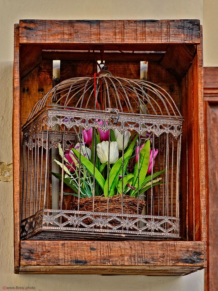 Blumenkäfig