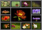 Blumenkalender für 2014