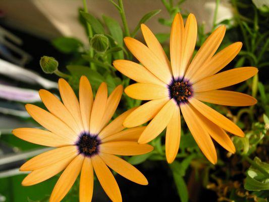 Blumenkasten
