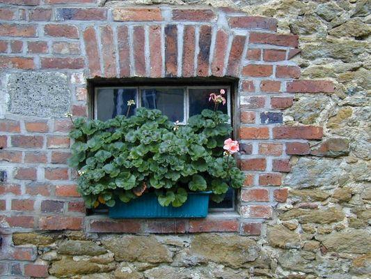 Blumenkasten auf der Fensterbank
