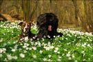Blumenkinder... von Nicole Stemmler