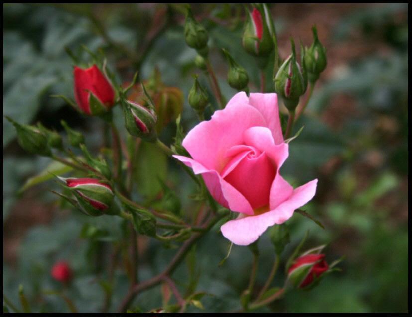 Blumenkönigin